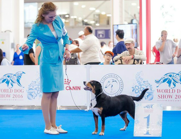 World Dog Show 2016 (Moscow, Russia)